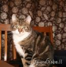 Name: Runa. Pet species: cat.  Runa.-Graži?-Labai!  Views: 54199